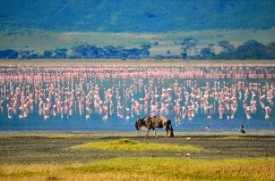 2b flamingo - ngo - mjl